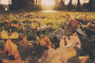 ramasser les feuilles